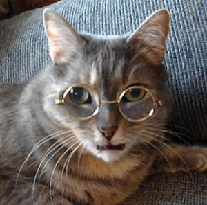 Cat-CatWearingGlasses